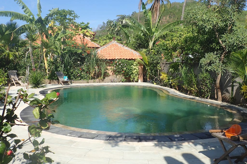 view of pool from under mango tree, house is in the back.