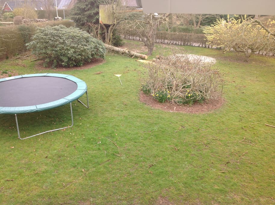 Garden with trampolin