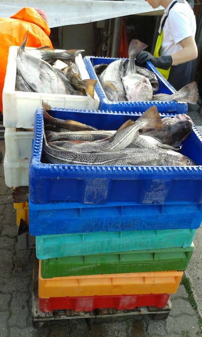 frischer Fischfang auf dem Kopf stehend