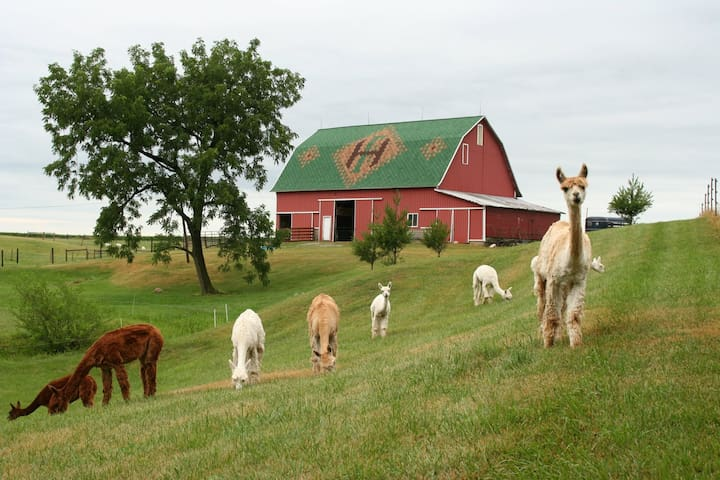 Charming Rural Farmhouse on a Working Alpaca Farm