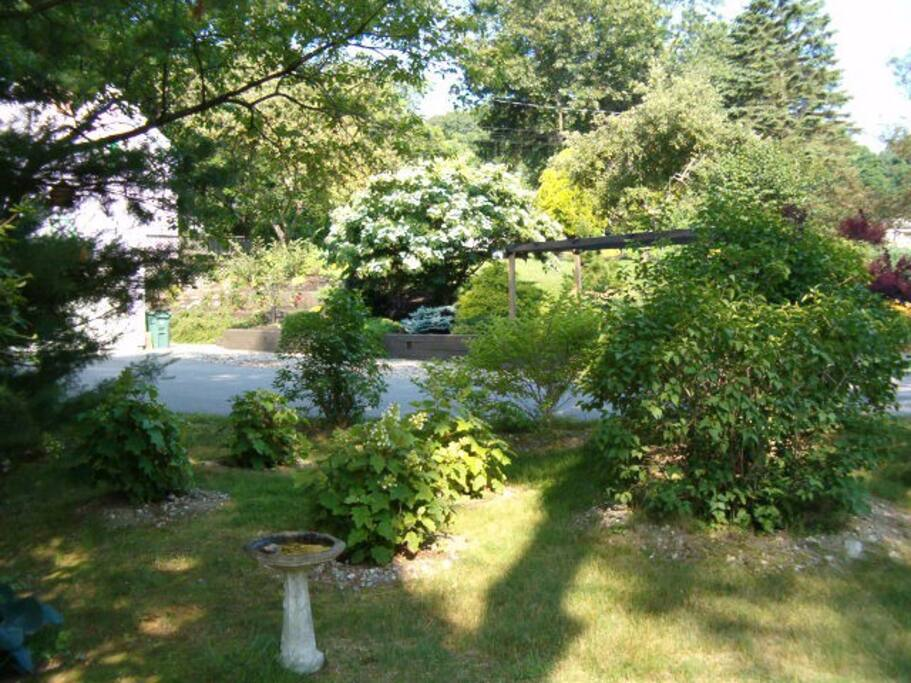 Hydrangeas Along Brook