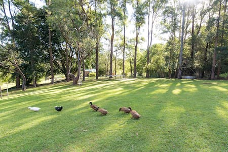 Green Duck Cottage Near Bangalow - Bangalow