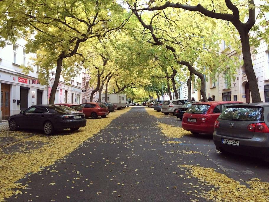 Luzicka Street
