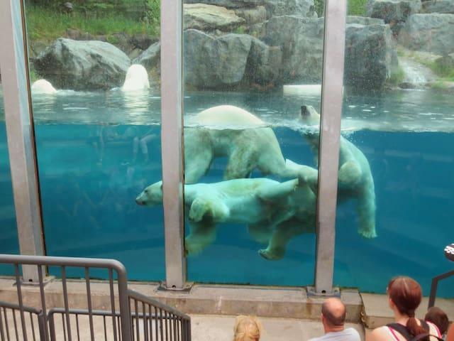 Près du Zoo