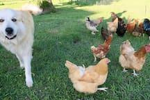 Duke checking on animals to ensure their safety