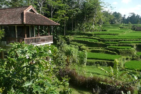 Villa Viola is an authentic Heaven, 10 min driving from Ubud center, stunning 360° view on rice fields, 1 guest house where comfortably 3+ sleeps in each, Insectproof, air conditioning, flat tv, WiFi large private pool, lush gardens, balè, gym room