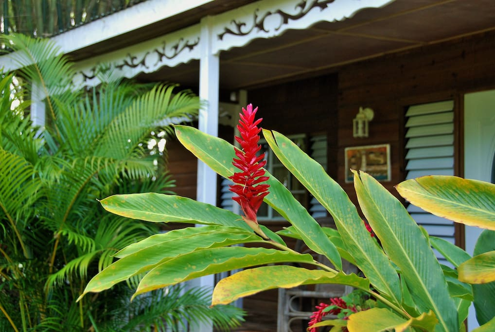 Red Ginger Lilly Tropical Flowers and Palms embrace the Villa