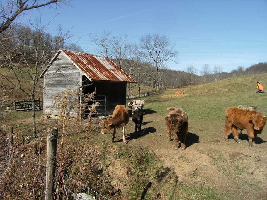 We have cows on the farm.