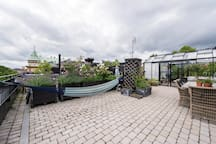 Relax in the hammock, have a barbecue for lunch or just hang out in the greenhouse.