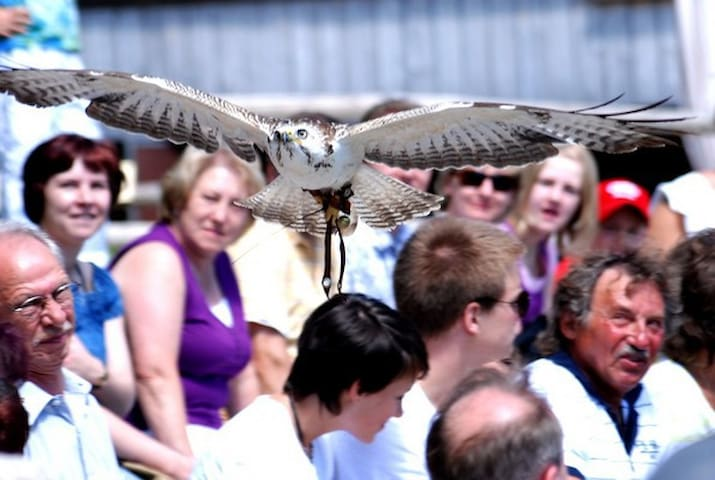 Birds of prey demonstrations Katharinenberg close to Wunsiedel