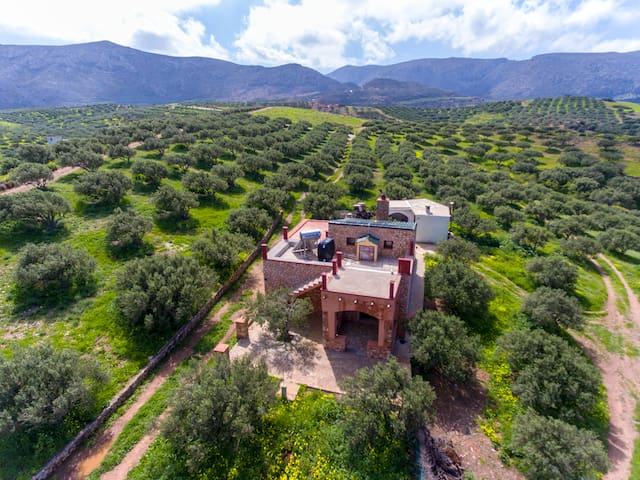 Only olive trees around