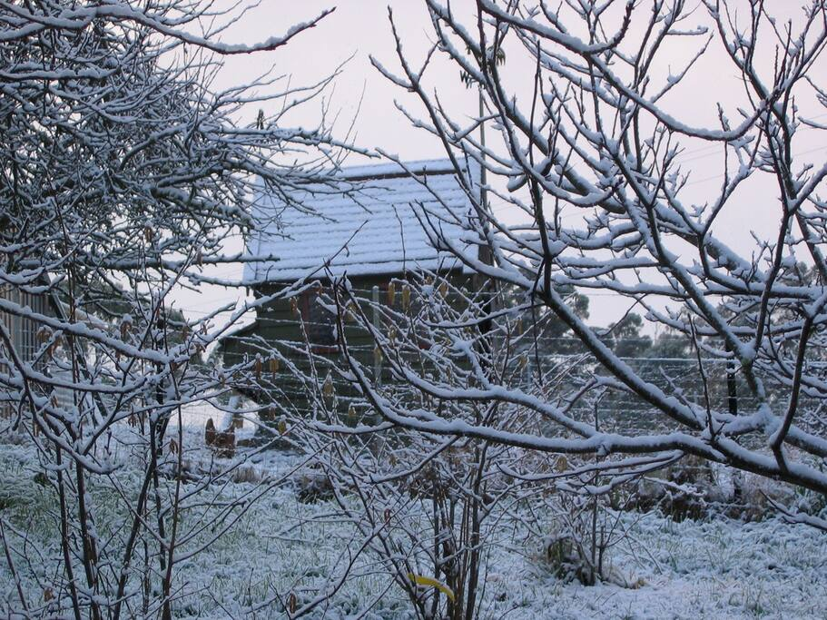 The chook house in the snow