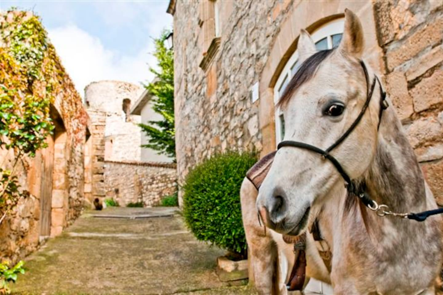 Guesthouse with horses in Barcelona