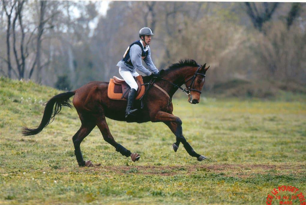 Possibilité avec ou sans son cheval d'être coaché en compétition
