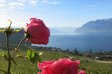 Unesco, Lavaux, splendid view over Lake Geneva