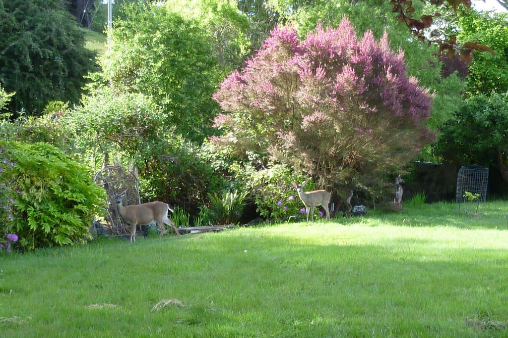 Deer family appears in late spring