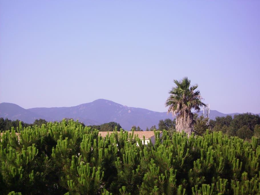 vue des terrasses sur les albères et le Canigou