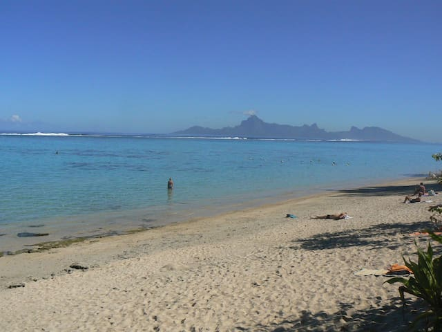 Les pieds dans le lagon - Puna'auia - Flat