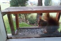I veverka si ráda přijde zamlsat.