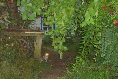 alte Hütte, wilder Garten - Therwil - Talo