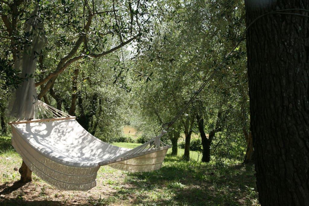Matrimonio Tra Gli Ulivi Toscana : Le selve casale in toscana b pernottamento e