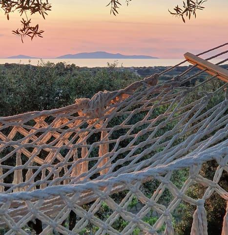 Vista mare, tra filari di ulivi e vigne