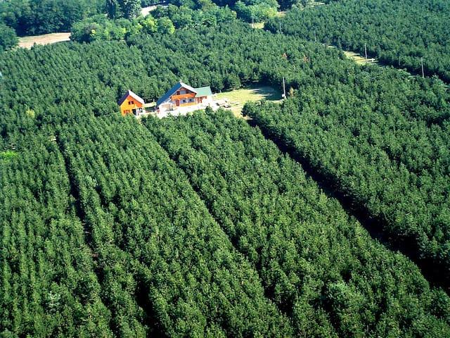 Otthonos vendégház a fenyőerdőben - Kecskemét - Hus