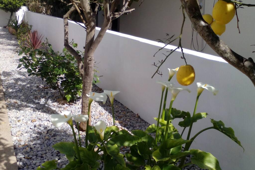 Un cuidado jardín rodea la casa