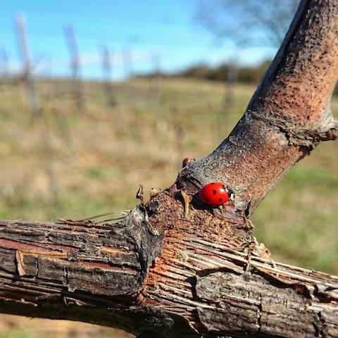 the ladybugs nest