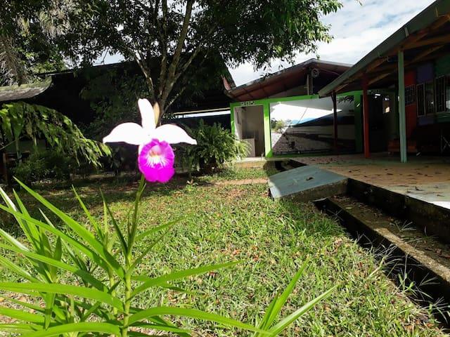 Ayawaska HOSTAL  ¡Puerta a la Amazonia!