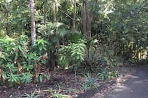 Rainforest gardens