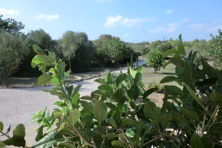 Freistehendes Ferienhaus auf Finca - Artà