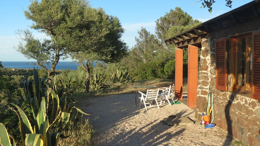 Natursteinhaus im Olivenhain - Dorgali - Dům