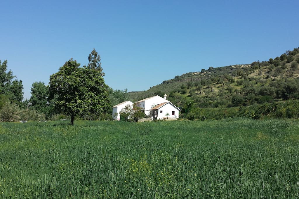 The Finca is next to a river in the heart of 9 hectares of organic farmland. Horse and donkeys.