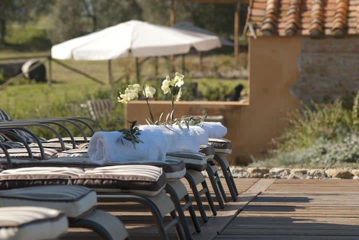 Farmhouse in the vineyards - Terricciola - บ้าน