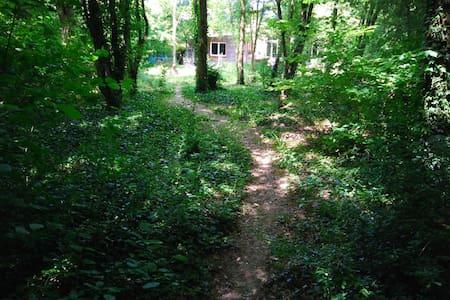 Maison en bois, jardin arboré, chat - Earth House