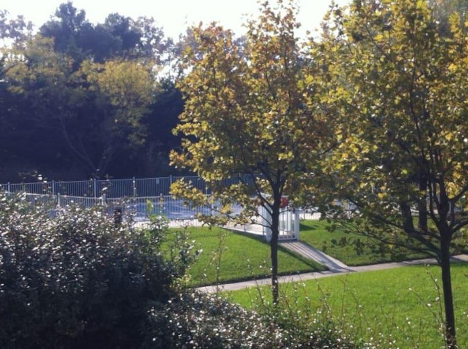 Vue de la terrasse. Piscine et jardin