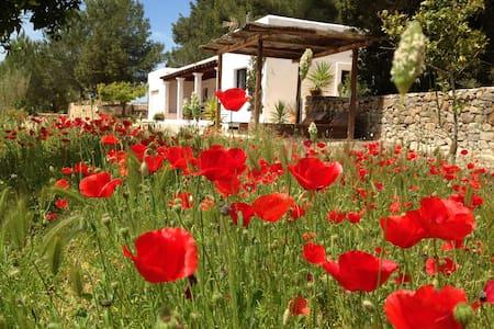Villa in Ibiza  - IBIZA