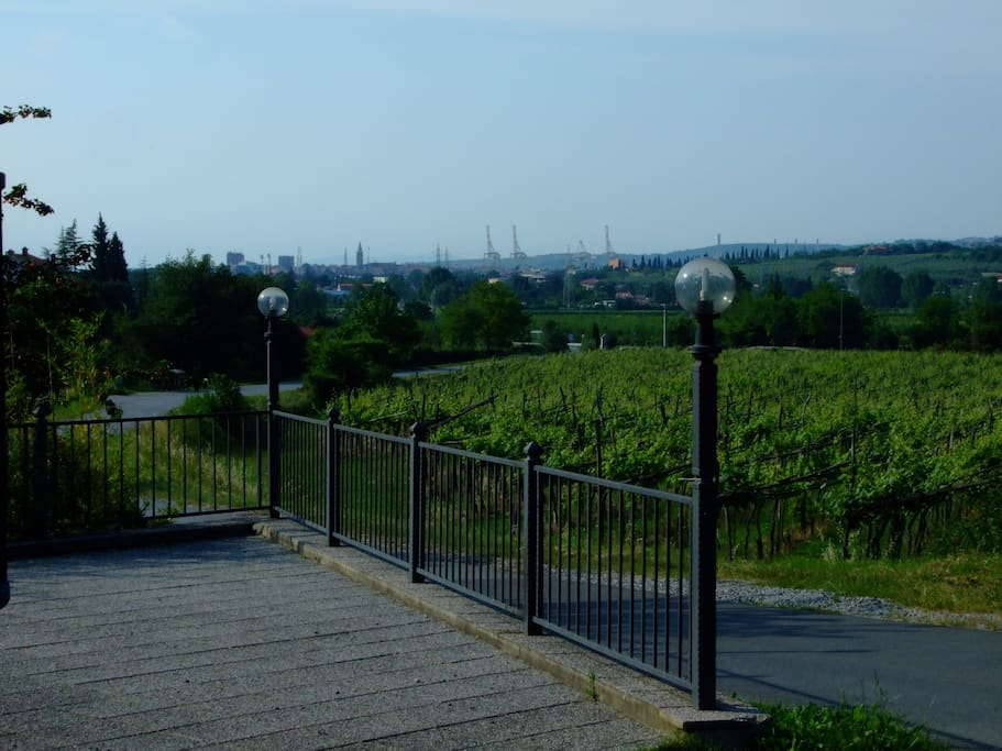 view at a wineyard an the old town center