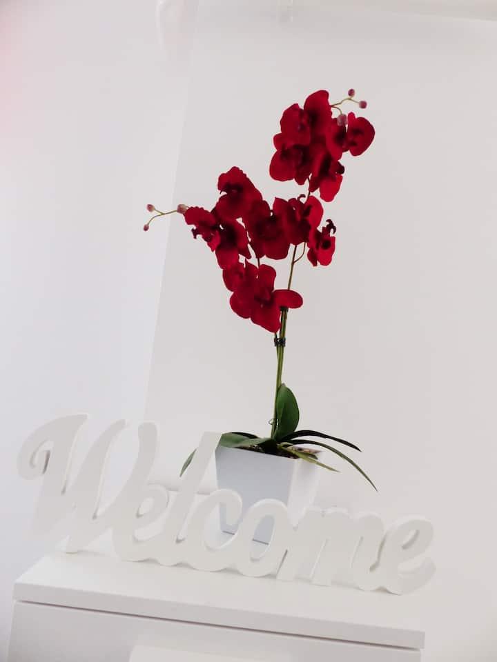 Orchidea Veszprém Apartman