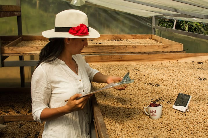 Tourism Coffee Farm Roasting Cupping 75$ x person.