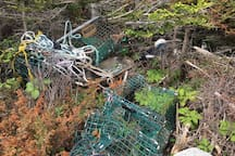 Storms can throw lobster traps high up on the rocks making for exciting beach/rock combing.
