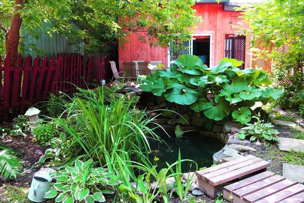 Green & unique backyard
