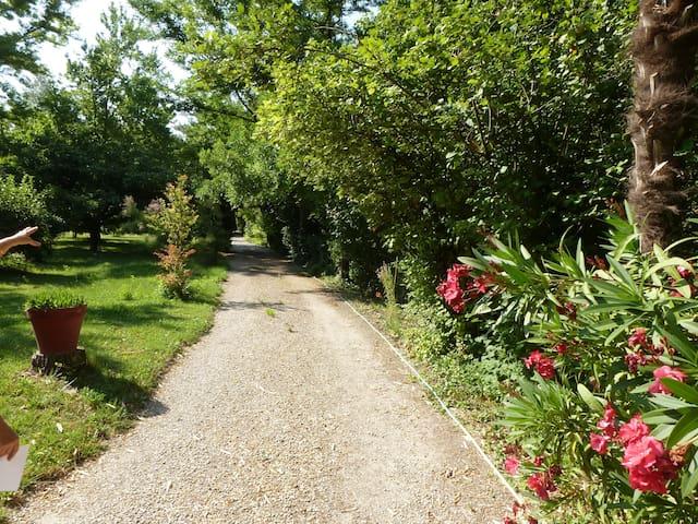 La Sorguette - Pernes-les-Fontaines - Flat