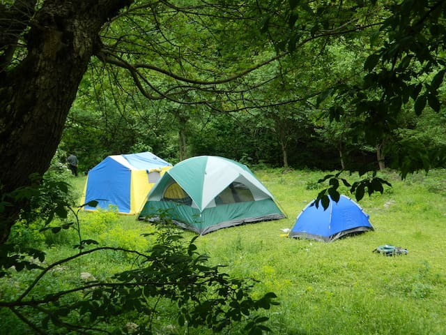 Camp Borjomi Campsite - Likani - Tienda de campaña