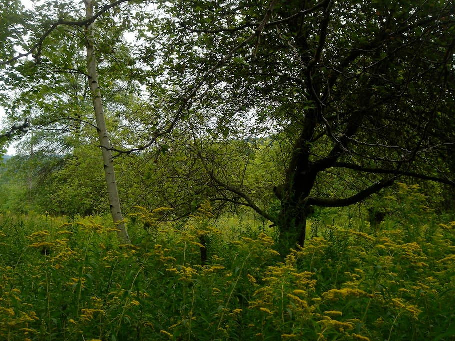 the field of swaying goldenrod in deep summer