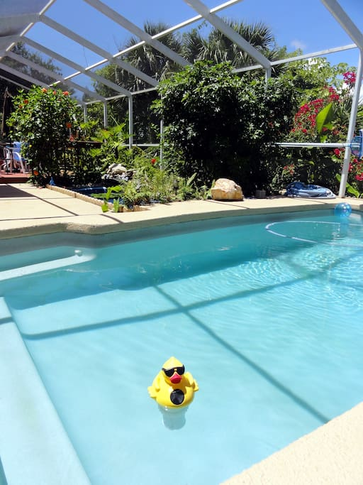Chill in the pool with the duck!