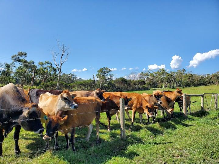 Step into a farm life