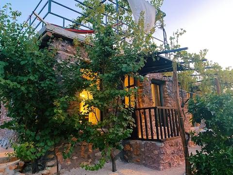 Seafront Papaya Garden House