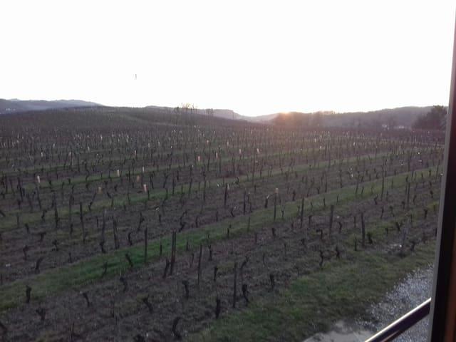 Au calme dans les vignes jurassiennes